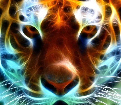 tiger ^^
